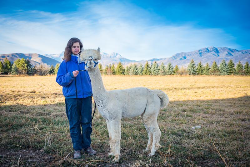 wlc Corinna Porter Alpacas298November 19, 2016.jpg