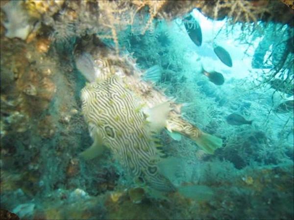 burr fish.wmv