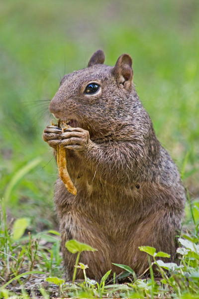 Lunching Squirrel