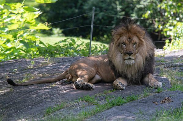 Bronx Zoo (6/30/19)