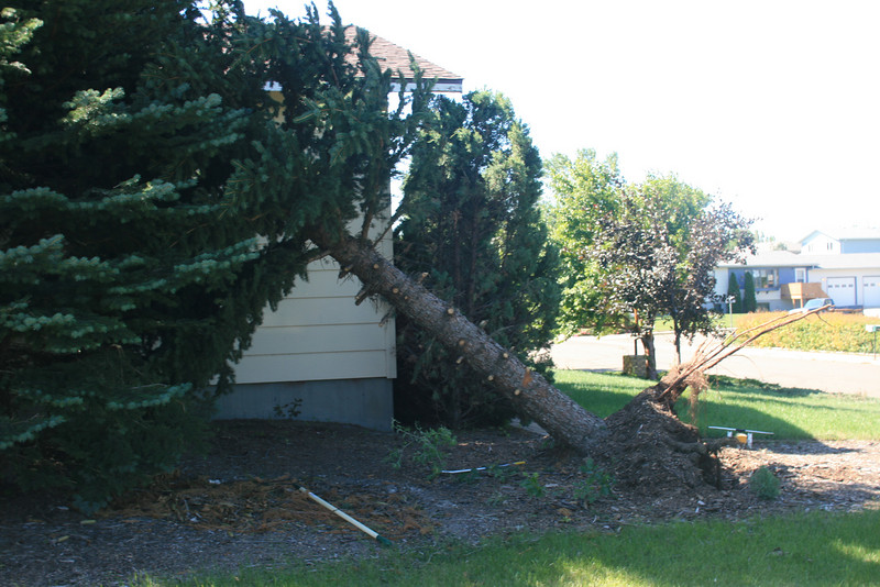 We were lucky iIt didn't damage the house.