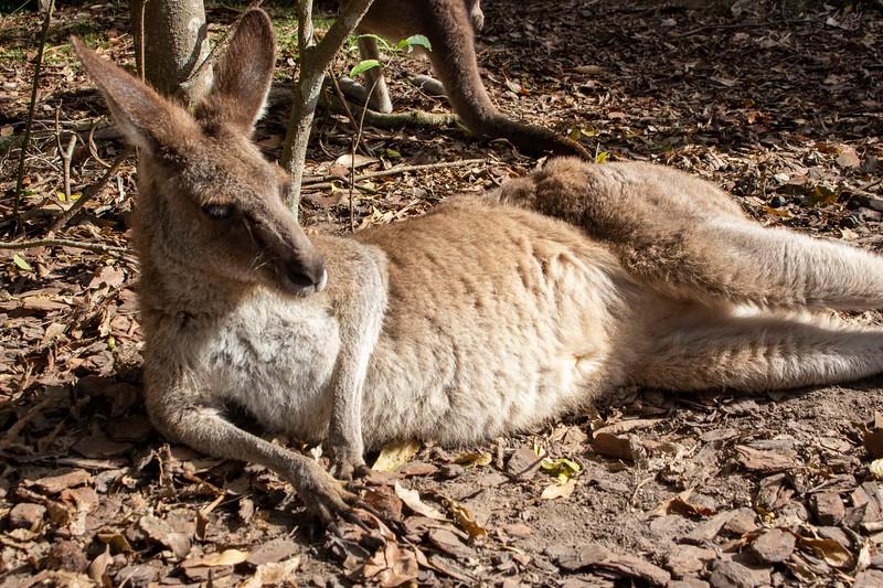 Australia_208.jpg