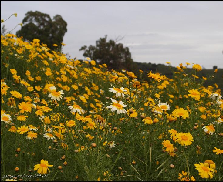 Canyon Park flowers 2010 05.jpg
