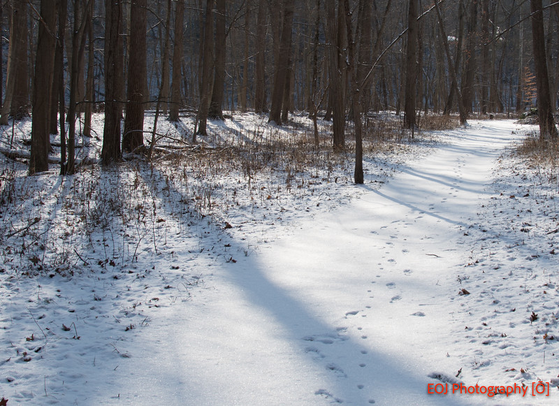 winter shoot-3.jpg