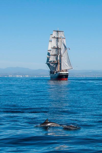 SDMM Star sail dolphins .jpg