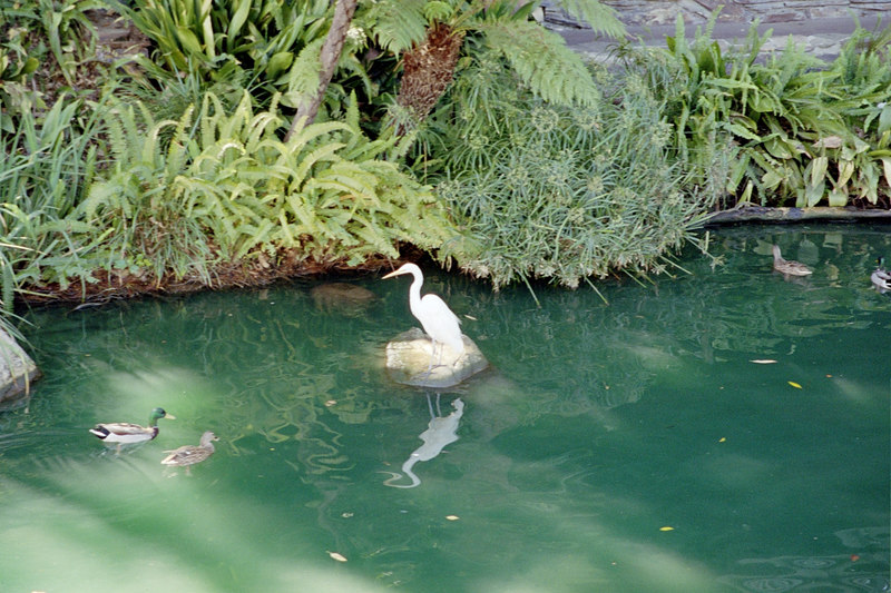 bird in rivers of america