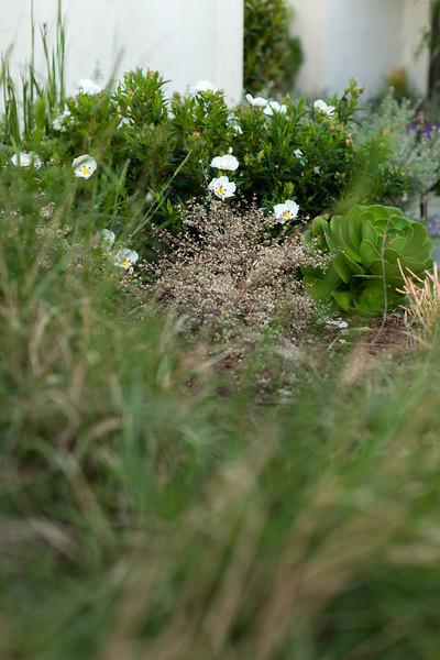 NGingold_050113DigLanscape_135.jpg