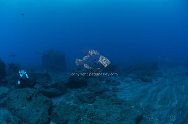Kermadec Islands 2013