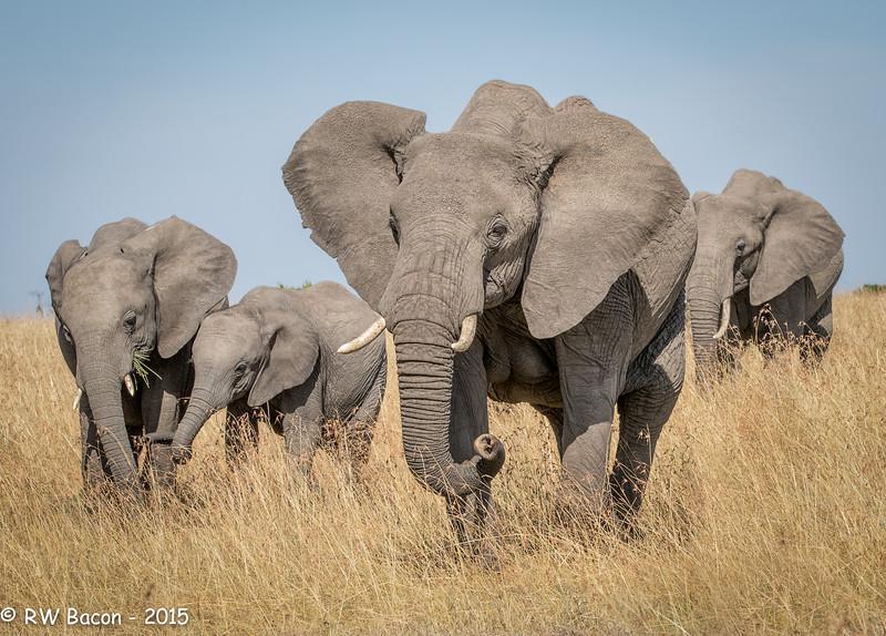 Mara Elephant Family - 2.jpg