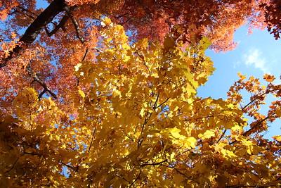 Fall Colors 10-25-18