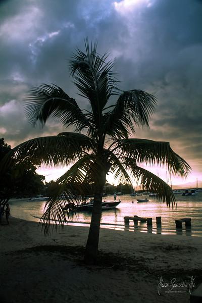 lonely palm tree IMG_0968.jpg