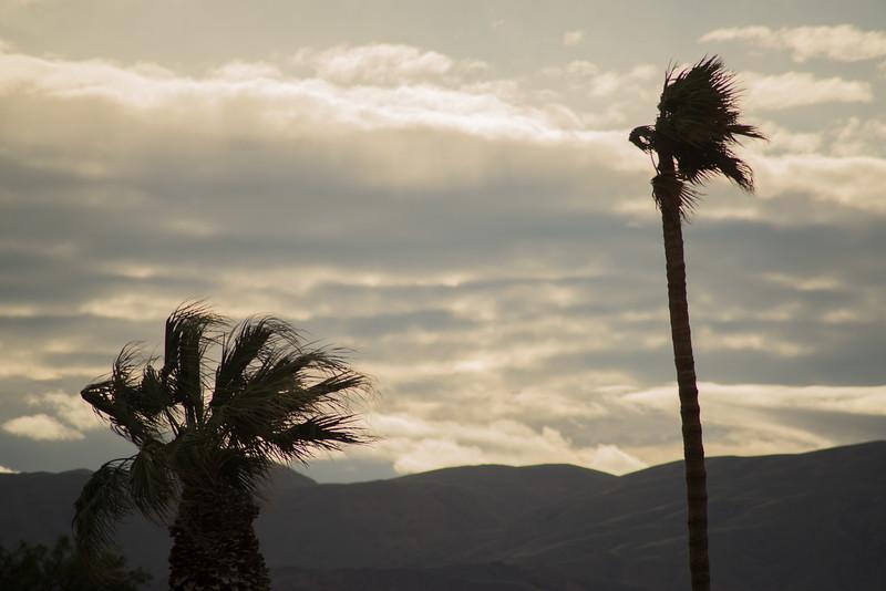 Two palms-141.jpg