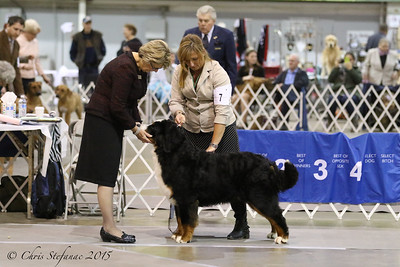 Middle Peninsula KC Dog Show-Sun 1/25/15