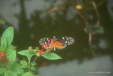 Straffan Butterfly Exhibition