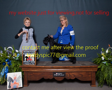 2019 Schnauzer National[dont not order on show place]
