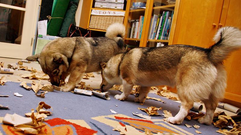 1 januari 2014 - Vuurwerkpakket honden