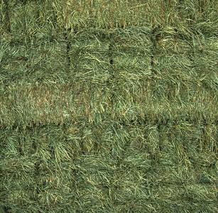 Orchard Grass 2