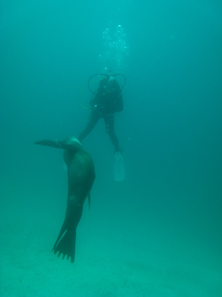 Diving in the Galapagos (108 of 392)