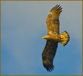 Eagles of Cohoes Oct 2012
