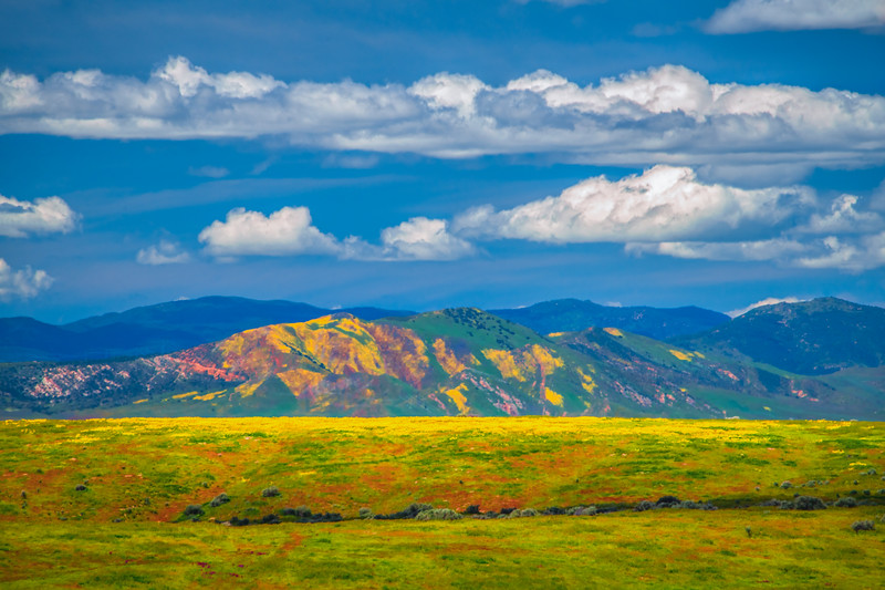 Carrizo Plain National Monument Wildflowers Superbloom Spring Symphony 23!  Elliot McGucken Fine Art Landscape Nature Photography Prints & Luxury Wall Art