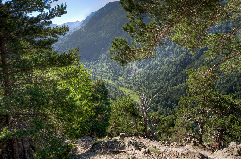 Thick canopy and mountains from a cliff in Andorra