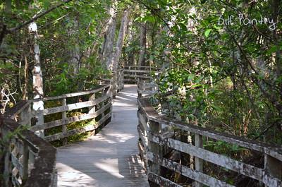Naples, Corkscrew Swamp Sanctuary