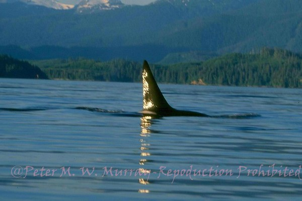 Alaska, South East Whales and Scenics