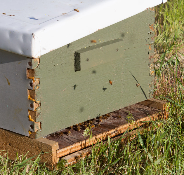 swarm_052214_082.jpg