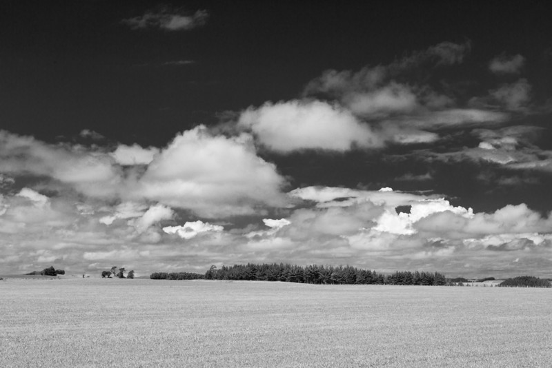 Himatangi Fields