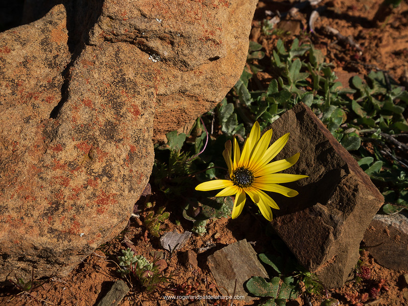 The resilience of life – some of the flowers seems to grow on rocks.