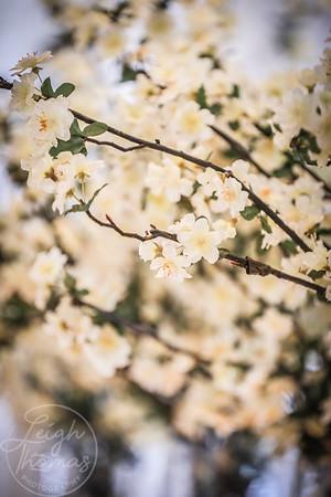 Seville Flowers-49