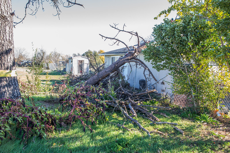 5671 Wallace Ave - Tree 1030am 12 16 2017 Extremly Windy Conditions-92.jpg