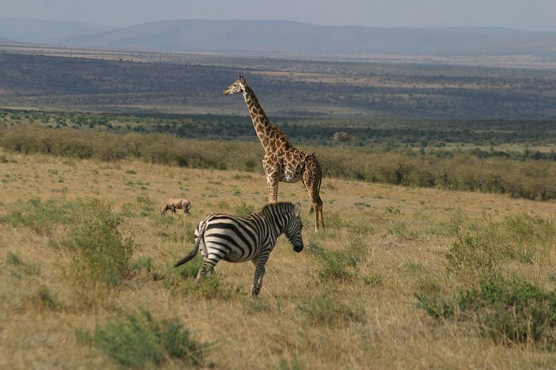 On safari in the Masai Mara Game Reserve, Kenya, November 18, 2005
