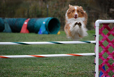 United States Dog Agility Association (USDAA)