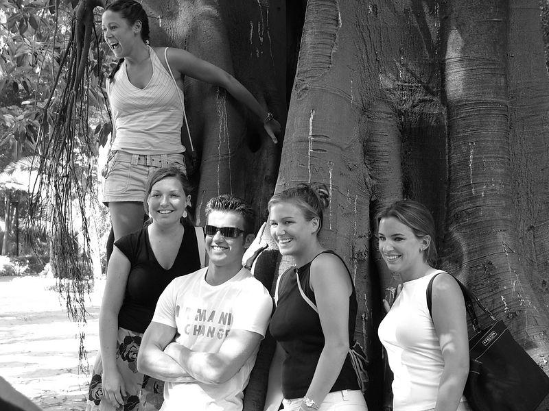 group tree