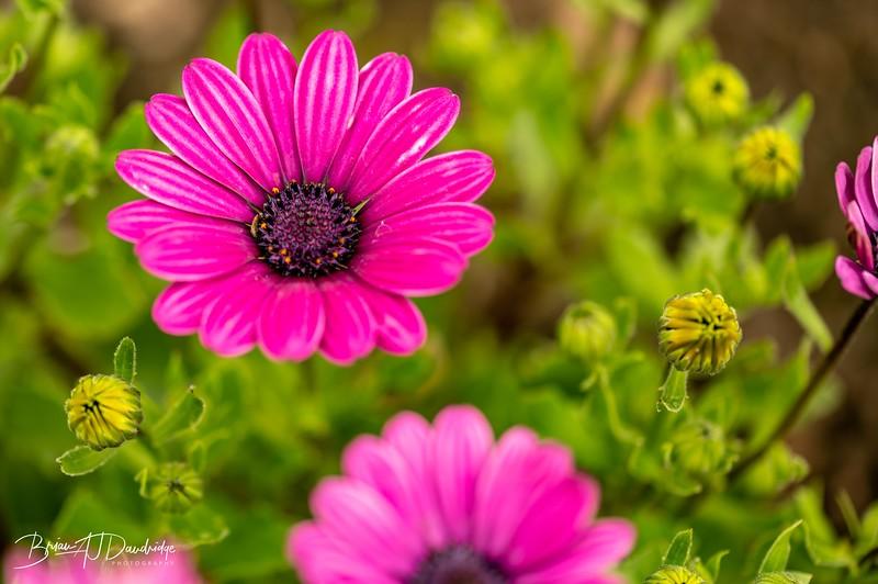 Garden colour-3339.jpg