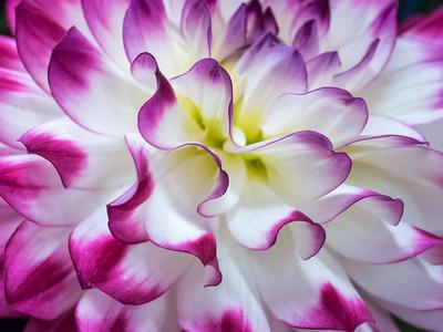Flowers & Foliage (Vibrant)