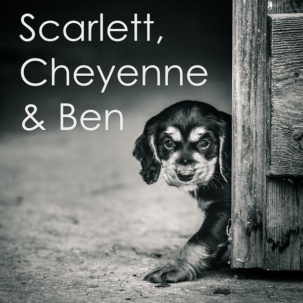 Scarlett-Icon.jpg