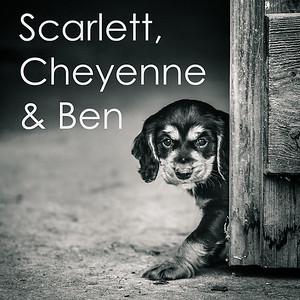Scarlett, Cheyenne & Ben