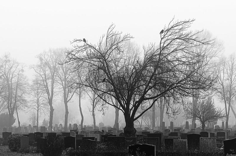 20110108_093332_zentralfriedhof_2317.jpg