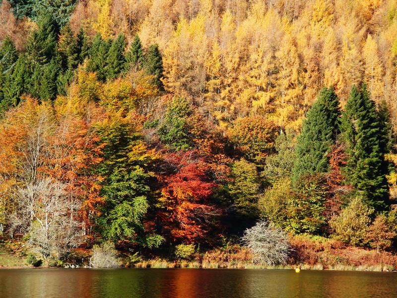 Llyn (Lake) Geirionydd autumn colours, Snowdonia, Wales, 2012