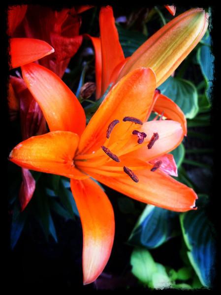 go big orange (iPhoneography)