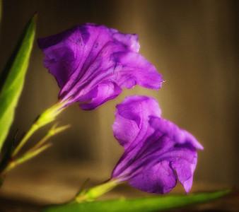 Flowers/Weeds