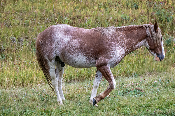9-15-20 Ab. Wildies - Roan Nordegg