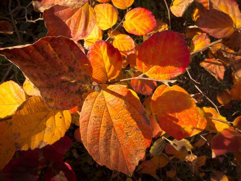 nov 16 - leaves.jpg