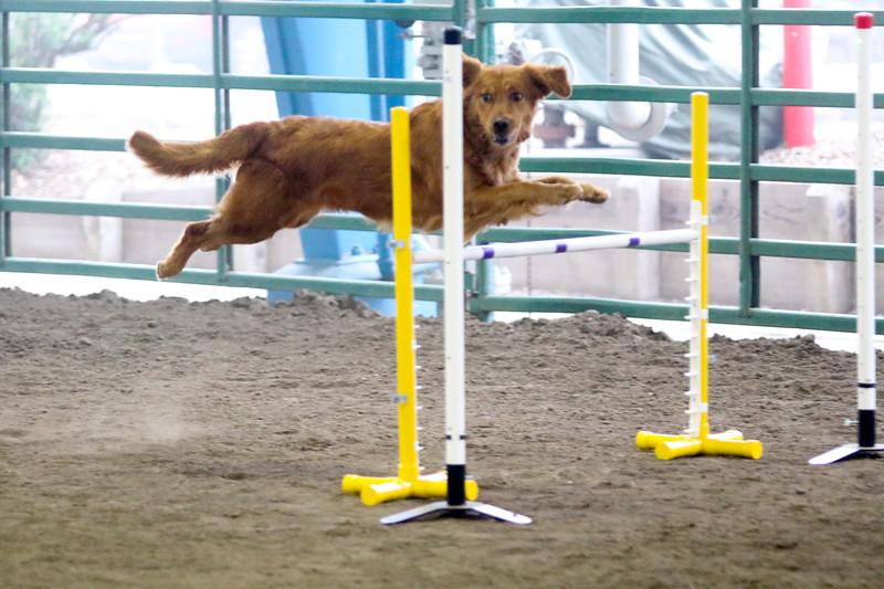 3-15-2015 Bloodhound-9829.jpg