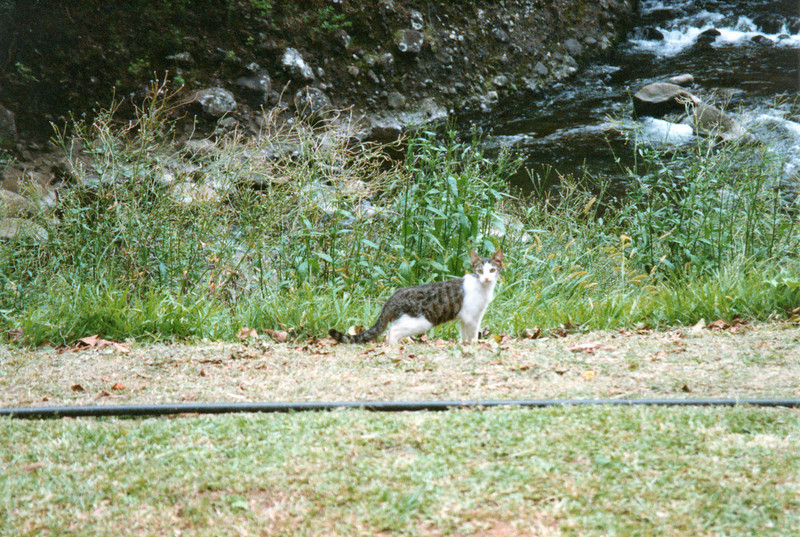 0530 - Iao feral cat