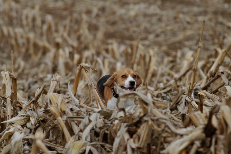 Traversing the Corn 08s