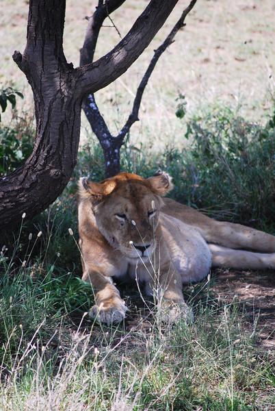 Serengeti (179).JPG
