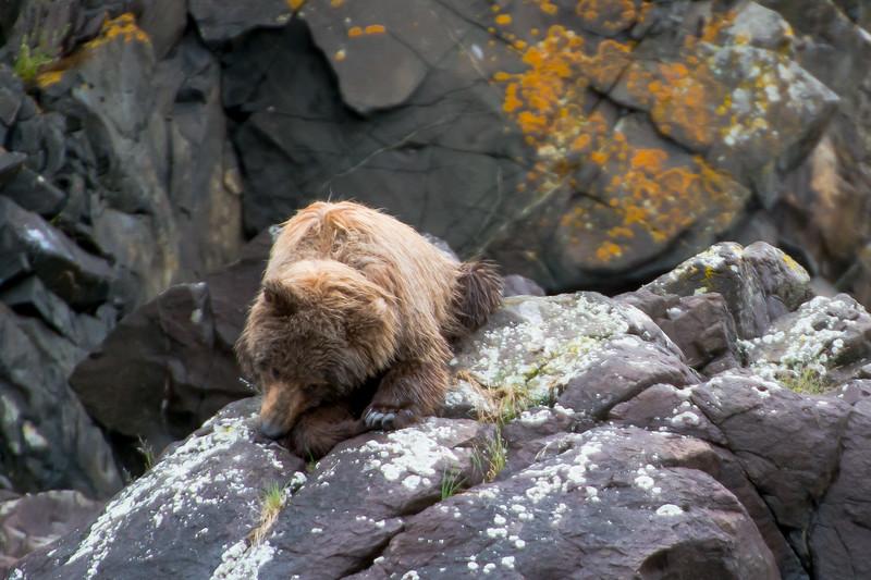 Alaska-9859.jpg